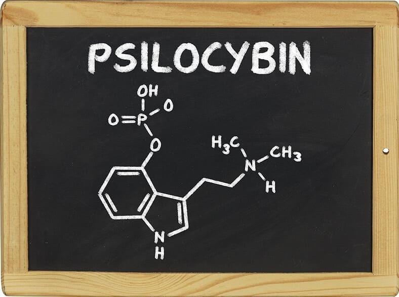 Отличия псилоцибинового гриба от поганки